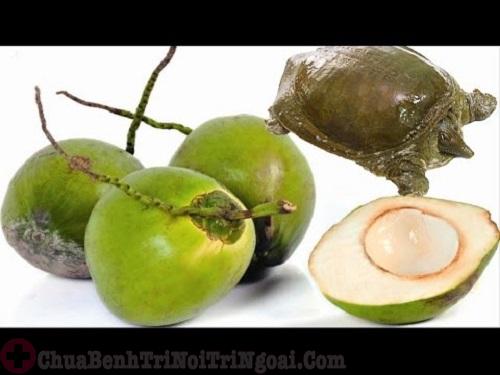 ba ba và quả dừa non trị bệnh trĩ